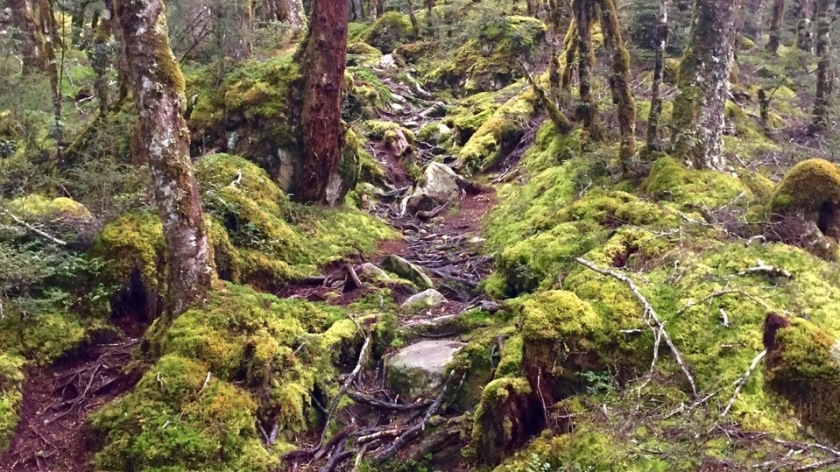 Hiking track through forest, Mt Aspiring National Park
