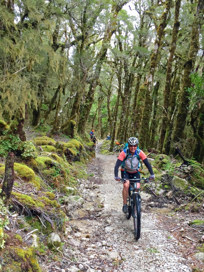 mountain biking through forest in New Zealand
