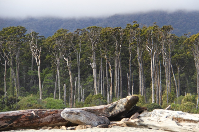 West Coast New Zealand Coastal Forest