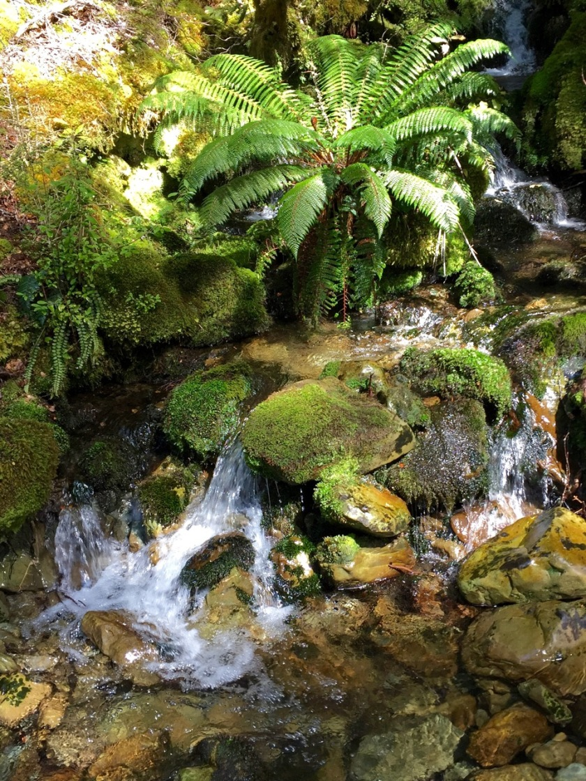 An alpine stream on the Greenstone - Caples Track, Mount Aspiring National Park, New Zealand