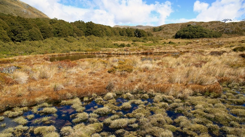 Alpine wetlands at McKellar Saddle, Greenstone - Caples Track, Mount Aspiring National Park, New Zealand