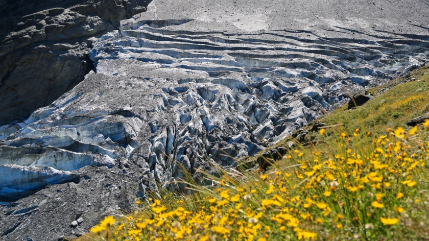 Alpine flowers and the Rob Roy Glacier, Wanaka, Mt Aspiring National Park, New Zealand