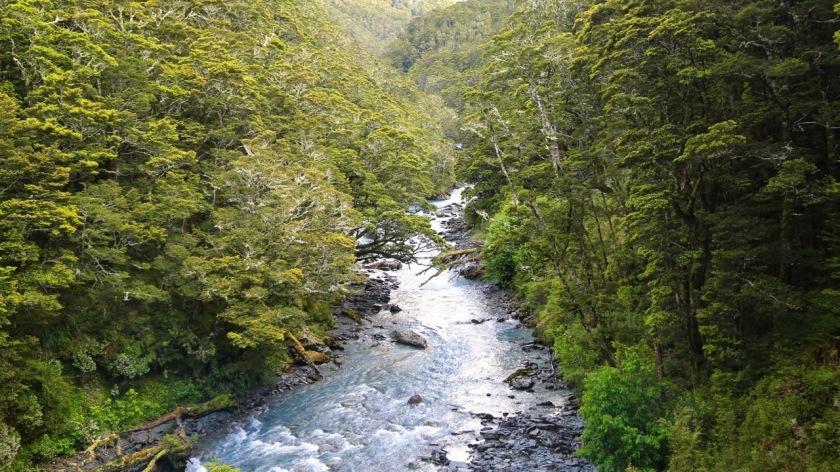 Native beech forest - Rob Roy Glacier, Wanaka, Mt Aspiring National Park, New Zealand