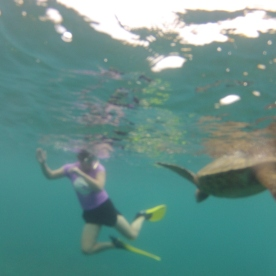 Snorkelling with Hawaiian green turtles, Maui.