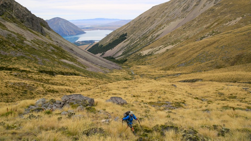 Hiker in tussock in the Southern Alps of New Zealand