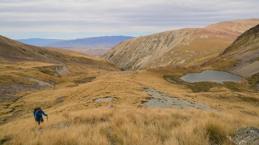 Hiking through tussock near Lake Ohau in the Southern Alps NZ
