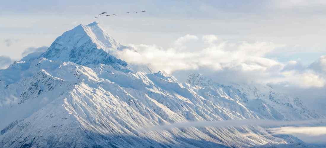 A flock of birds over Mt Cook, NZ